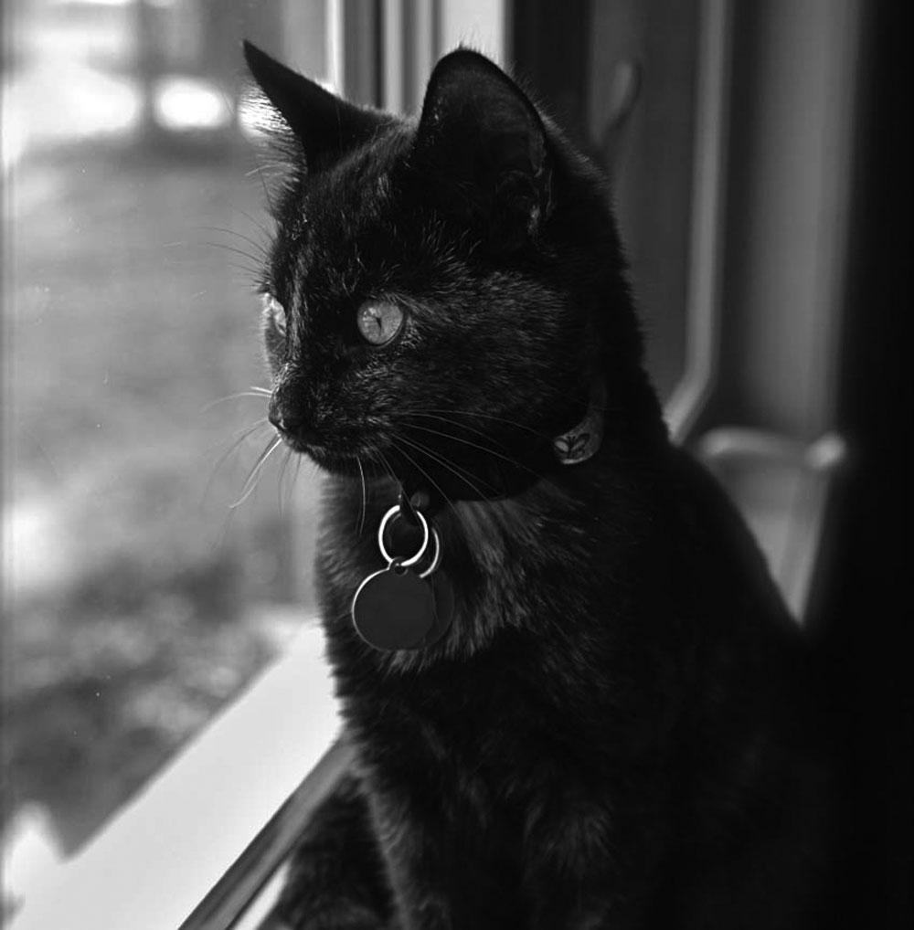 http://crittersittersct.com/images/Cat-at-window.jpg