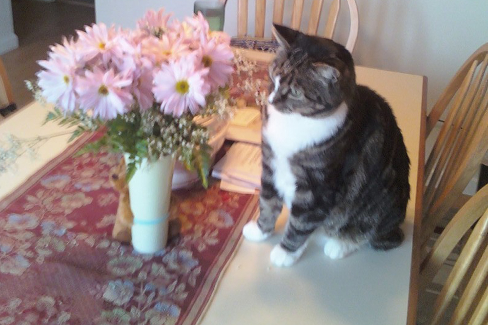 Seneca the cat looking at a vase of flowers
